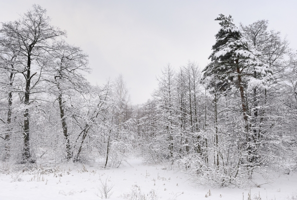 Russia-Winter -lake-Kratovskoe